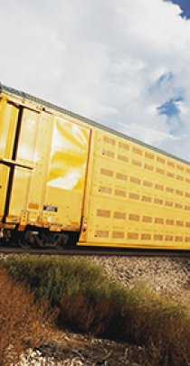 freight train of yellow livestock cars at road crossing